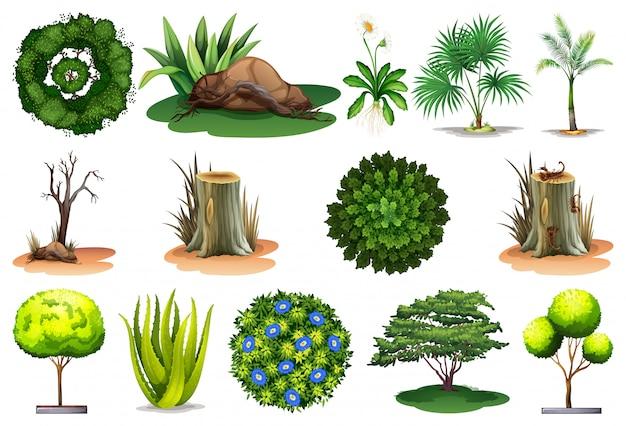Conjunto de plantas diferentes