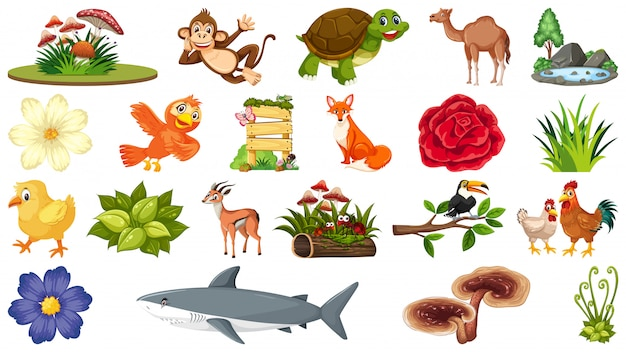 Conjunto de plantas e animais
