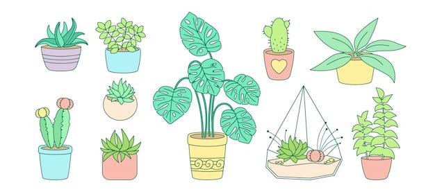 Conjunto de plantas e suculentas, em vaso de cerâmica linha plana. flor de casa linear dos desenhos animados de cor. plantas da casa, cacto, monstera vaso. coleção de decoração de interiores elegante. ilustração isolada