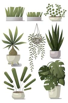Conjunto de plantas em casa.