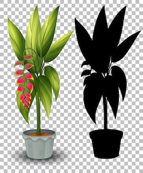 Conjunto de plantas em vaso em transparente