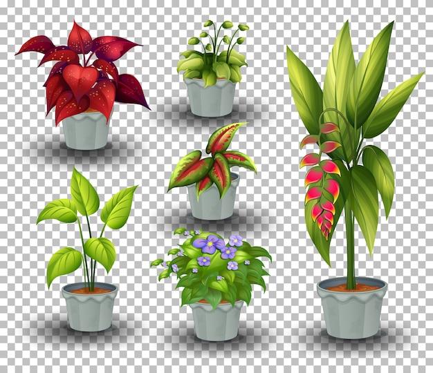 Conjunto de plantas em vaso