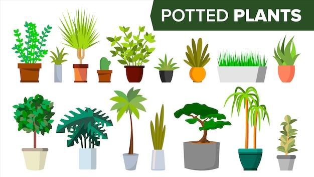 Conjunto de plantas em vasos