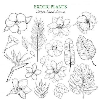 Conjunto de plantas exóticas desenhadas à mão