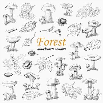 Conjunto de plantas florestais isoladas e cogumelos no estilo de desenho
