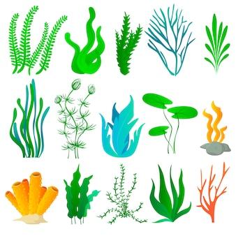 Conjunto de plantas marinhas e algas do aquário