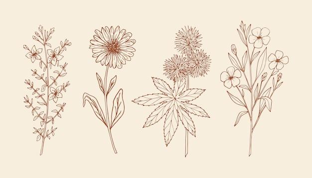 Conjunto de plantas medicinais desenhadas à mão