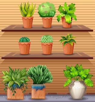 Conjunto de plantas nas prateleiras