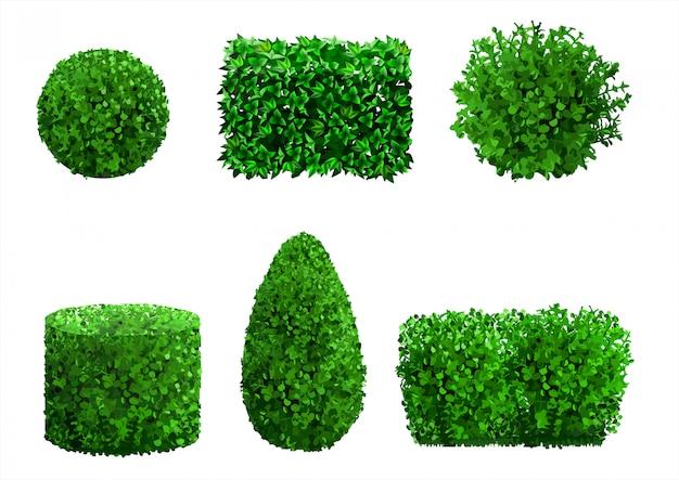 Conjunto de plantas ornamentais e árvores para paisagismo