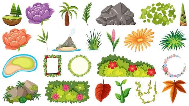 Conjunto de plantas ornamentais