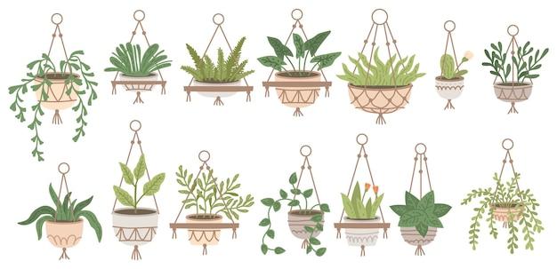 Conjunto de plantas penduradas em vasos e vasos em cabines de selva