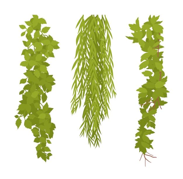 Conjunto de plantas penduradas