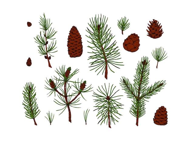 Conjunto de plantas perenes e cones desenhados à mão