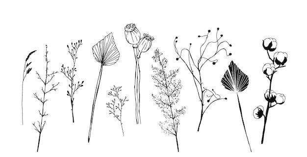 Conjunto de plantas secas minimalistas, flores e folhas, elementos do vetor escandinavo do interior