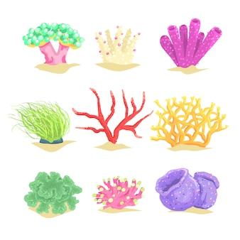 Conjunto de plantas subaquáticas, algas e algas marinhas aquáticas ilustrações