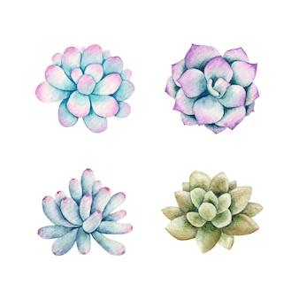 Conjunto de plantas suculentas em aquarela