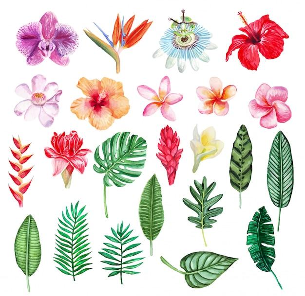 Conjunto de plantas tropicais em aquarela de mão desenhada.