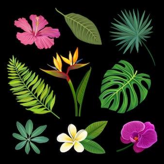 Conjunto de plantas tropicais, folhas de palmeira e flores exóticas, ilustrações em um fundo preto