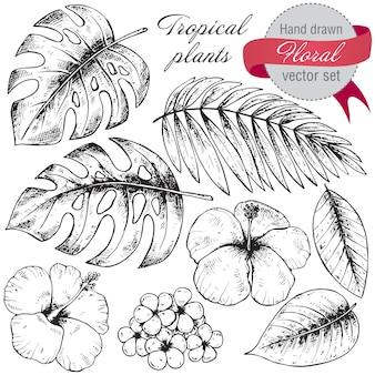 Conjunto de plantas tropicais gráficas mão preto e branco desenhado