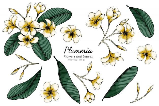 Conjunto de plumeria flor e folha desenho ilustração