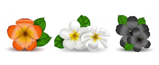 Conjunto de plumeria realista flores tropicais