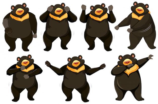 Conjunto de posição de dança de urso