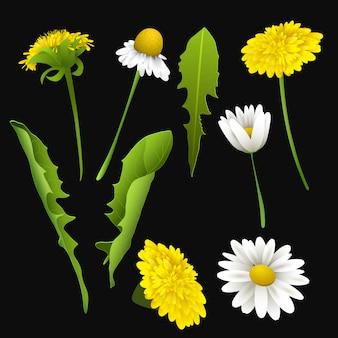 Conjunto de primavera realista ou verão flores e folhas