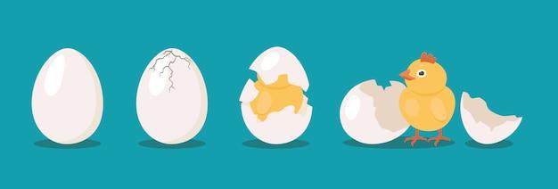 Conjunto de processos de aves para incubação