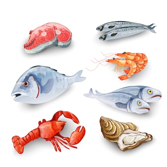 Conjunto de produtos de frutos do mar