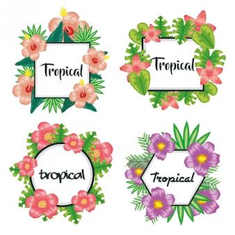 Conjunto de quadros com flores e folhas tropicais