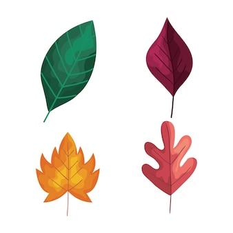 Conjunto de quatro folhas de outono, plantas, folhagens, ícones, ilustração
