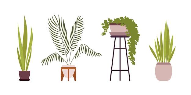 Conjunto de quatro plantas de chão verde em vasos retrô