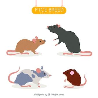Conjunto de quatro raças de ratos