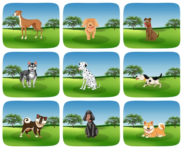 Conjunto de raça de cachorro na natureza