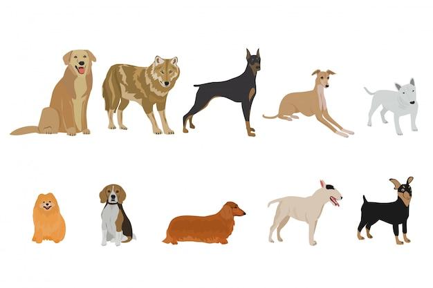 Conjunto de raças de cães no fundo branco