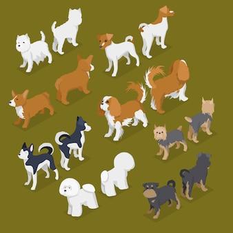 Conjunto de raças de cães pequenos isométricos