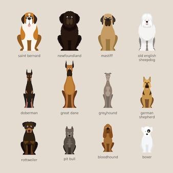 Conjunto de raças de cães, tamanho gigante e grande, vista frontal