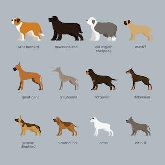 Conjunto de raças de cães, tamanho gigante e grande, vista lateral