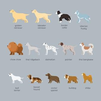 Conjunto de raças de cães, tamanho grande e médio, vista lateral
