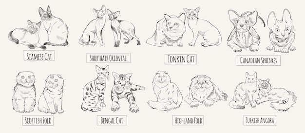 Conjunto de raças de gatos desenhadas