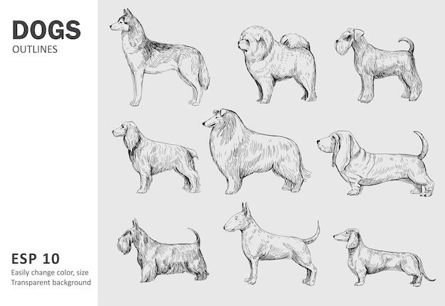 Conjunto de raças populares de cães. ilustração desenhada à mão isolada no branco