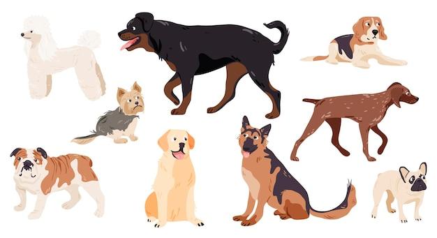 Conjunto de raças puras de cães