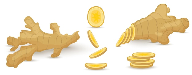 Conjunto de raiz de gengibre fresco em fundo branco. ícones do vetor de comida vegan em um estilo moderno de desenho animado. conceito de comida saudável para o projeto.