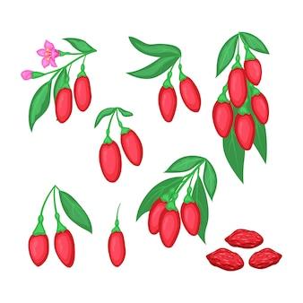 Conjunto de ramo de bagas de goji de desintoxicação de superalimento com flores e frutas secas. illystration da baga vermelha isolada no fundo branco. Vetor Premium