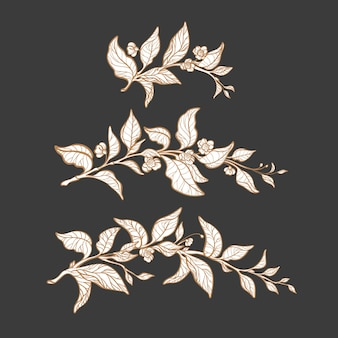 Conjunto de ramo de chá. quadro da natureza. desenho artístico de ervas