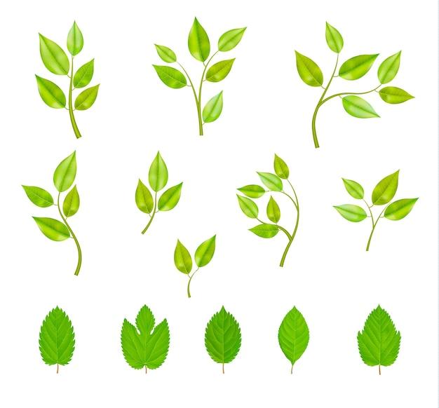 Conjunto de ramos com folhas isoladas