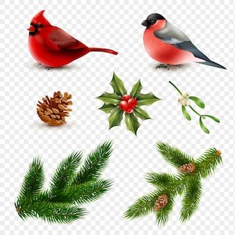 Conjunto de ramos de abeto de pássaros de inverno