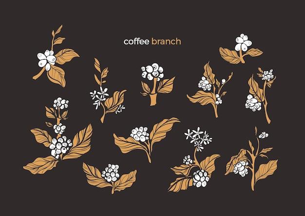 Conjunto de ramos de arbusto de café natural com folhas de feijão Vetor Premium