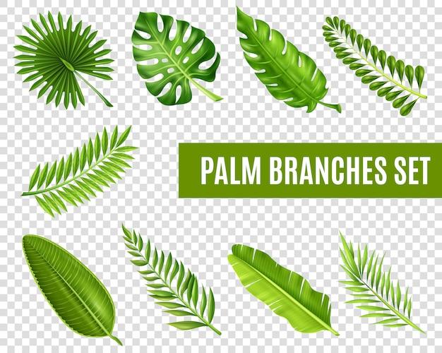 Conjunto de ramos de árvore de palma