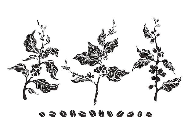 Conjunto de ramos de árvores de café com folhas em forma de feijão